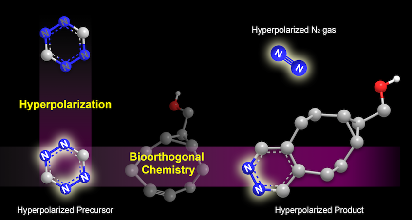 Schematic of the hyperpolarization strategy