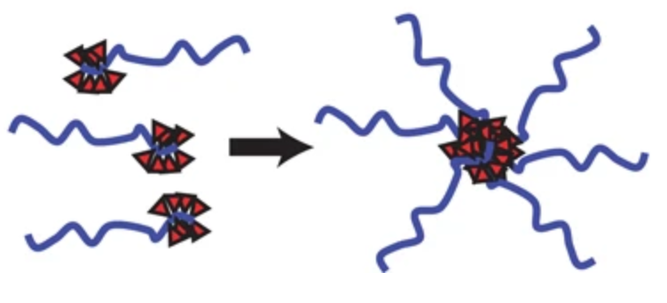Self-assembly of CP nanoparticles triggered with hydrophobic drug conjugation