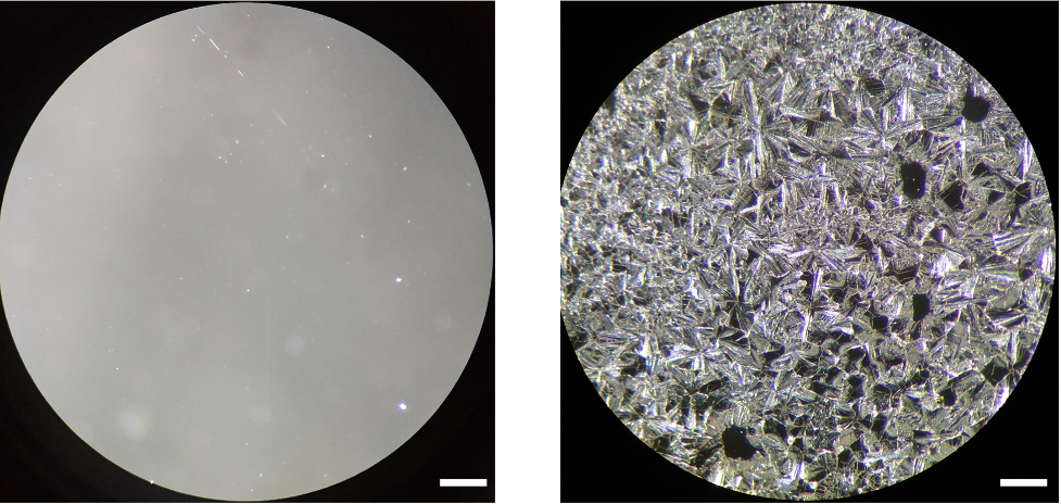 Optical microscopy image of S‐NPB glassy film on the left and its eventual crystallization at 140 °C on the right. Scale bar is 250 µm. Images provided by Dr. David Mitzi.
